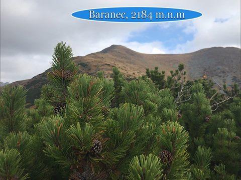 Baranec FOTO MM